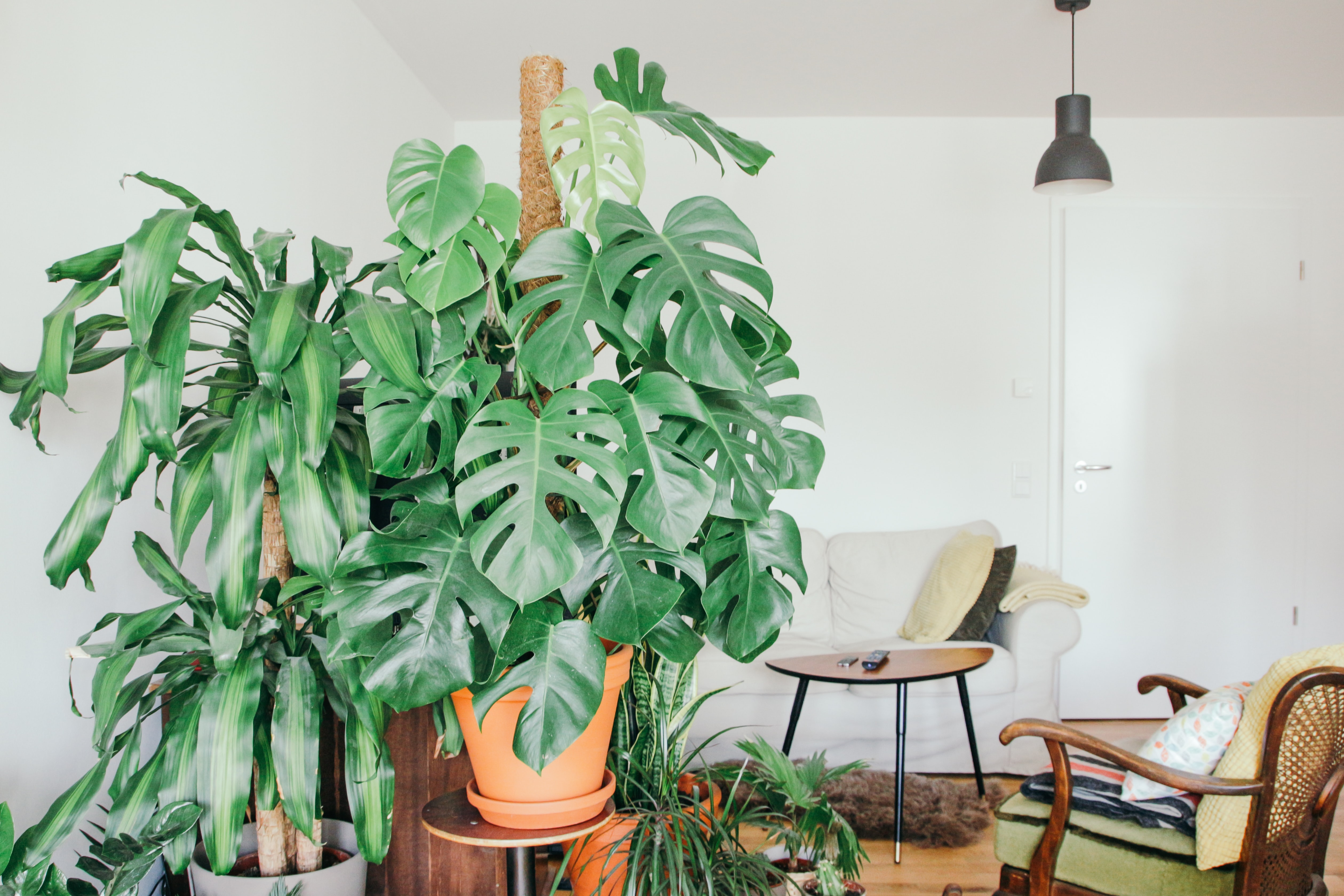 Why You Need Plants in Your Home