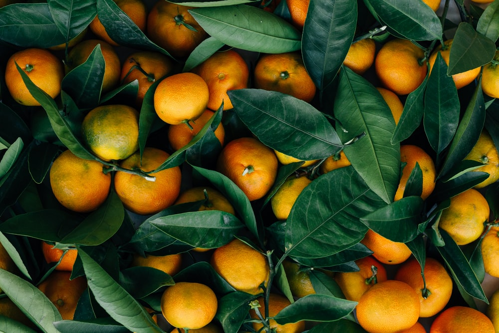 Oranges Are From China - Food Science