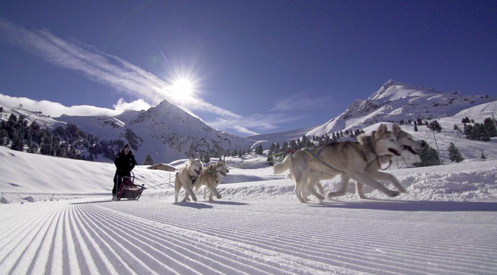 Ride a Dogsled in Siberia - Russia