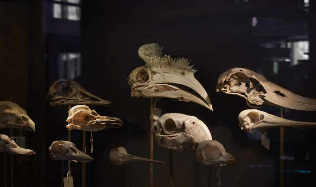 Grant Museum of Zoology